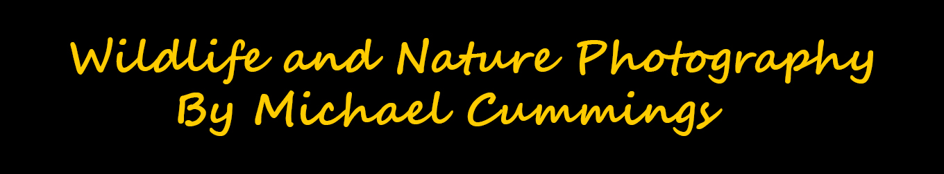 Logo for Wildlife And Nature Photography
